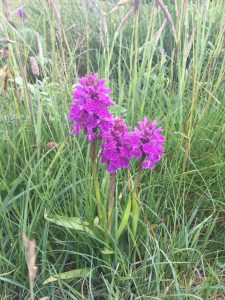 Wild orchid growing by the side of the road